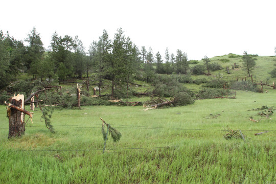 Damage photos from the Crook County Tornado